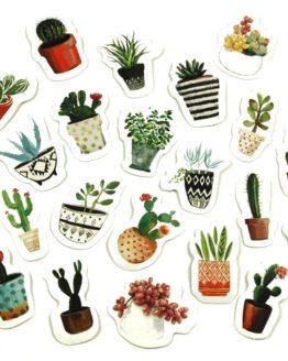 sticker cactus plante
